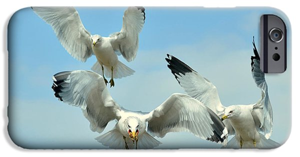 Seagull iPhone Cases - Winner Takes All iPhone Case by Fraida Gutovich