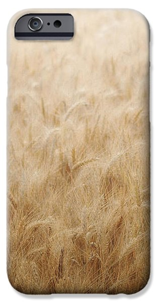Winsome Wheat iPhone Case by Amy Tyler