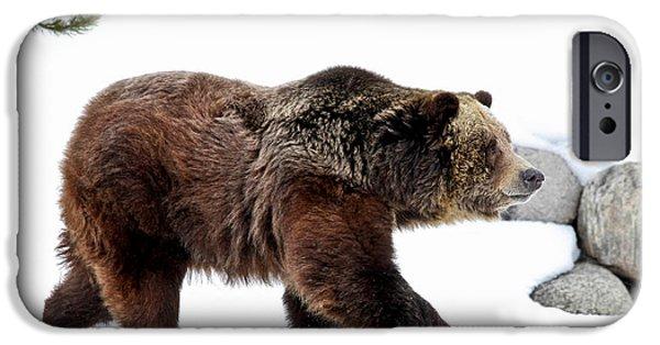Kodiak iPhone Cases - Winter Bear Walk iPhone Case by Athena Mckinzie