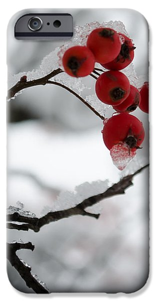 Berry Pyrography iPhone Cases - Winter Berries iPhone Case by Crystal Crist