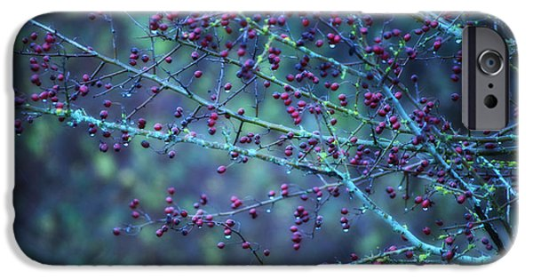 Berry Mixed Media iPhone Cases - Winter Berries iPhone Case by Heather L Giltner