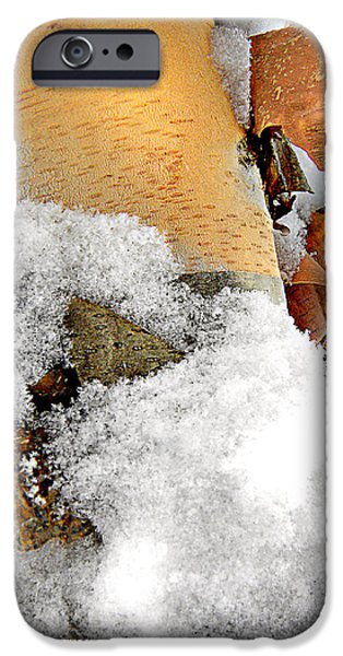 Snow Scene iPhone Cases - Winter Birch 1 iPhone Case by Julie Palencia