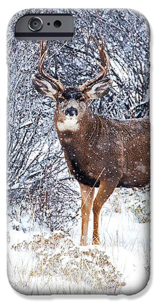 Winter Buck iPhone Case by Darren  White