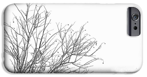 Berry iPhone Cases - Winter Tree iPhone Case by Diane Macdonald