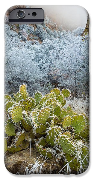 Pears iPhone Cases - Winter Cacti iPhone Case by Inge Johnsson