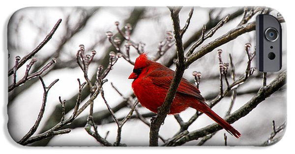 Winter Storm iPhone Cases - Winter Cardinal - Icy Tree iPhone Case by Mary Carol Story