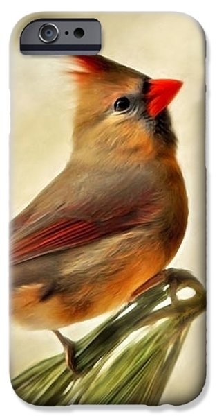 Winter Cardinal iPhone Case by Christina Rollo