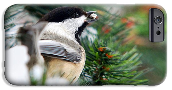 Chickadee iPhone Cases - Winter Chickadee With Seed iPhone Case by Christina Rollo
