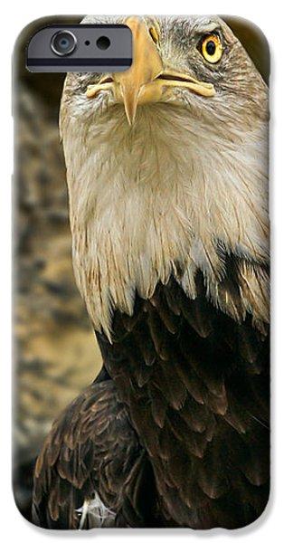 Winter Eagle iPhone Case by Bob Orsillo