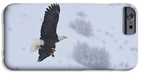 Eagle Photographs iPhone Cases - Winter Flight iPhone Case by Mike  Dawson