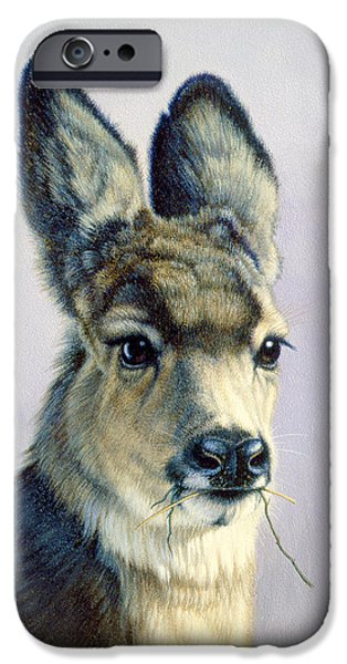 Fawn iPhone Cases - Winter Forage-Fawn iPhone Case by Paul Krapf