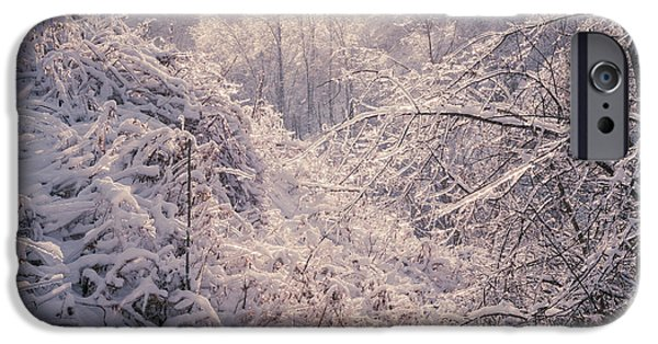 Condition iPhone Cases - Winter forest after ice storm iPhone Case by Elena Elisseeva