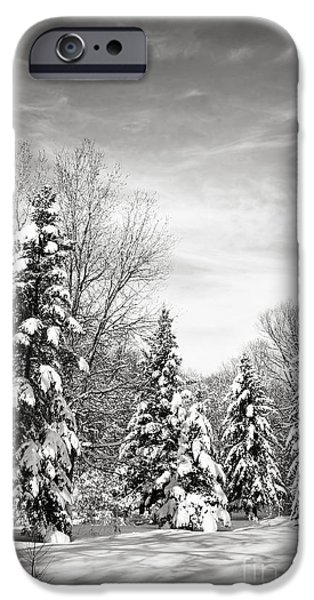 Park Scene iPhone Cases - Winter forest in black and white iPhone Case by Elena Elisseeva