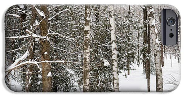 Snow iPhone Cases - Winter forest landscape panorama iPhone Case by Elena Elisseeva