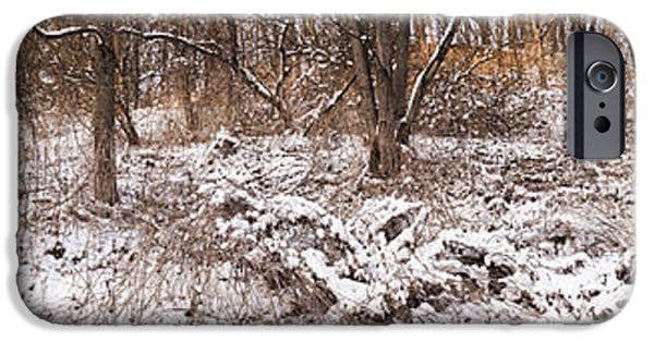 Park Scene iPhone Cases - Winter forest panorama iPhone Case by Elena Elisseeva