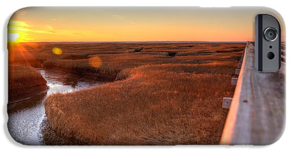 Salt Marsh. New England iPhone Cases - Winter Gold iPhone Case by Michelle Wiarda