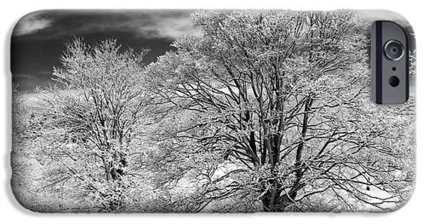 Winter Scene iPhone Cases - Winter Horse Chestnut Trees Monochrome iPhone Case by Tim Gainey