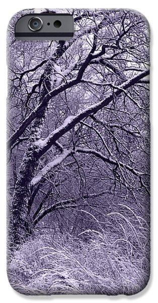 Winter in Purple iPhone Case by Carol Groenen