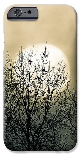 Winter Trees Photographs iPhone Cases - Winter Into Spring iPhone Case by Bob Orsillo