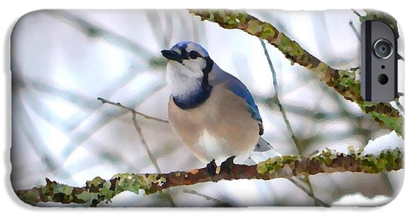 Fauna iPhone Cases - Winter Jay iPhone Case by Deena Stoddard