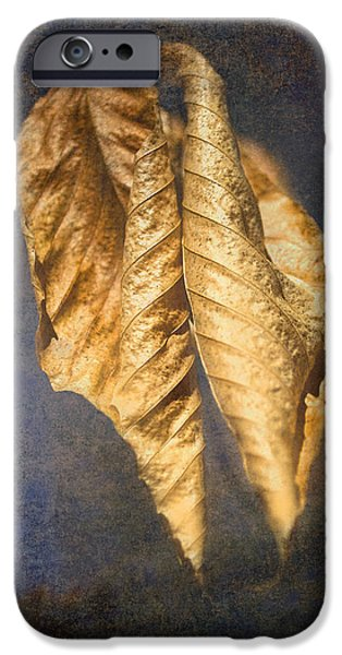 Nature Abstracts iPhone Cases - Winter Leaves Abstract iPhone Case by Sandi OReilly
