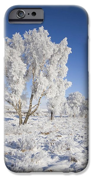 Wintry Digital iPhone Cases - Winter Magic iPhone Case by Pat Speirs
