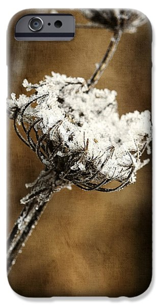 Winter Morning iPhone Case by Bonnie Bruno