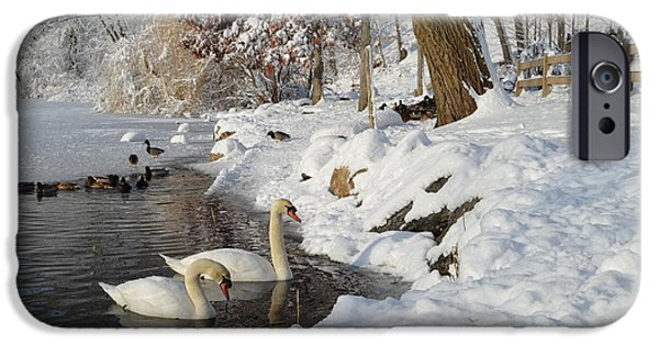 Swans... iPhone Cases - Winter on the Lake iPhone Case by Janet Davaros