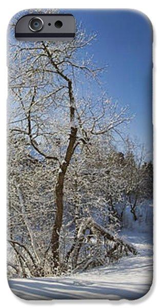 Winter path iPhone Case by Anna Grigorjeva