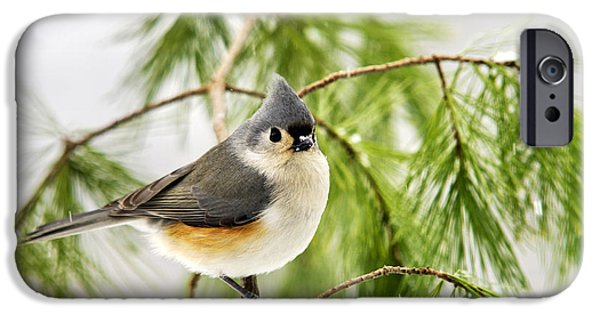Titmouse iPhone Cases - Winter Pine Bird iPhone Case by Christina Rollo