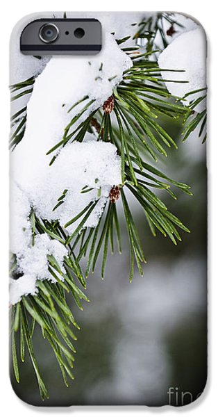 Winter Trees Photographs iPhone Cases - Winter pine branches iPhone Case by Elena Elisseeva