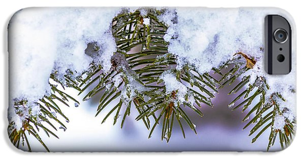Pines Pyrography iPhone Cases - Winter Pine iPhone Case by Rick Bartrand