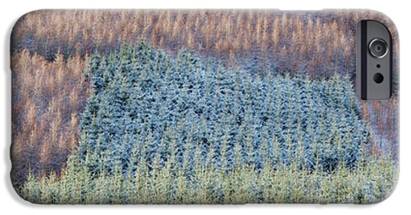 Winter iPhone Cases - Winter Pines Scotland iPhone Case by Tim Gainey