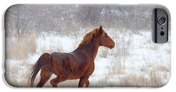 Mustang iPhone Cases - Winter Proud iPhone Case by Mike  Dawson