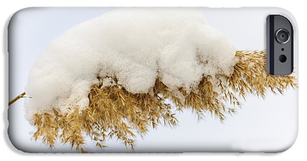 Snowy iPhone Cases - Winter reed under snow iPhone Case by Elena Elisseeva