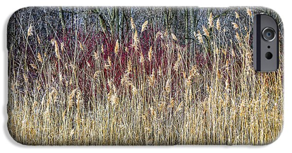 Forest Detail iPhone Cases - Winter reeds and forest iPhone Case by Elena Elisseeva