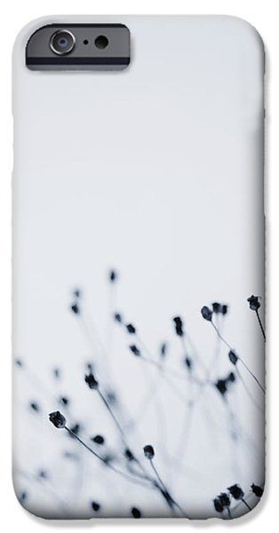 Plant iPhone Cases - Winter Remains 2 iPhone Case by Rebecca Cozart