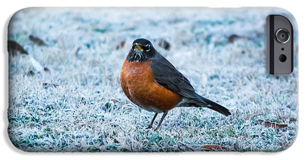 Instinct iPhone Cases - Winter Robin iPhone Case by Shelby  Young