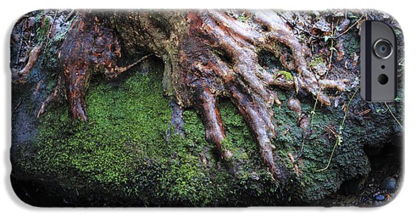 Tree Roots iPhone Cases - Winter roots iPhone Case by Paul Cowan