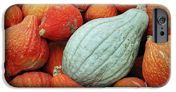 Farm Stand iPhone Cases - Winter Squash 1 iPhone Case by Charlette Miller