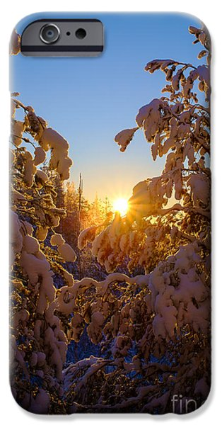 Snowy Night iPhone Cases - Winter Sunset Behind the Trees iPhone Case by Ismo Raisanen