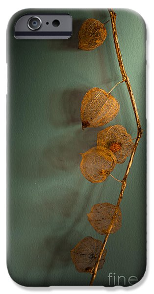 Berry iPhone Cases - Winter Treasures iPhone Case by Jan Bickerton