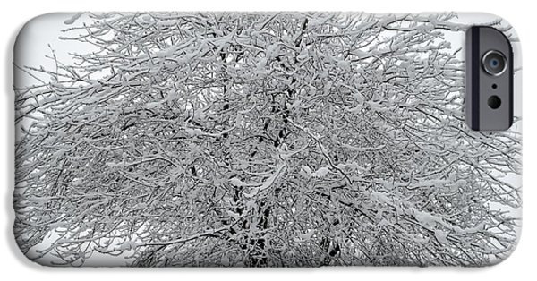 Snow iPhone Cases - Winter Tree iPhone Case by Amy Taylor