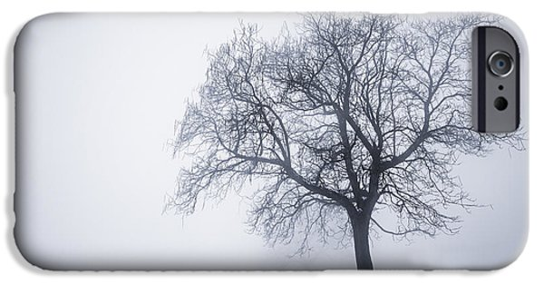 Park Scene iPhone Cases - Winter tree and bench in fog iPhone Case by Elena Elisseeva