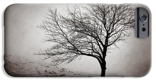 Harsh iPhone Cases - Winter Tree iPhone Case by Dave Bowman