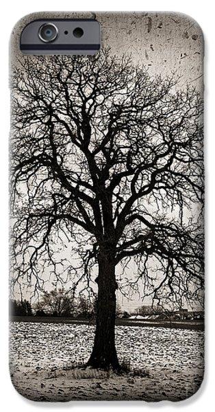 Snowy iPhone Cases - Winter tree iPhone Case by Elena Elisseeva