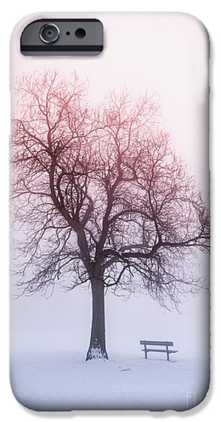 Snow Scene iPhone Cases - Winter tree in fog at sunrise iPhone Case by Elena Elisseeva