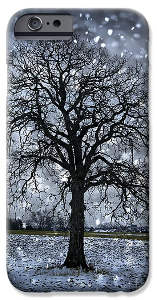 Snowy Evening iPhone Cases - Winter tree in snowfall iPhone Case by Elena Elisseeva