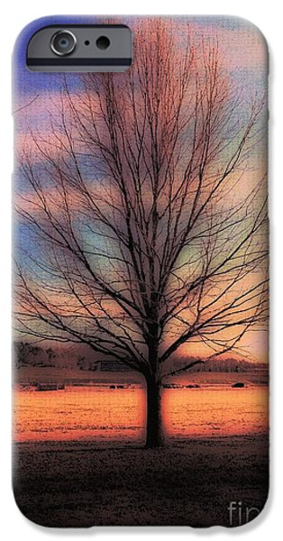Struckle iPhone Cases - Winter Tree iPhone Case by Kathleen Struckle