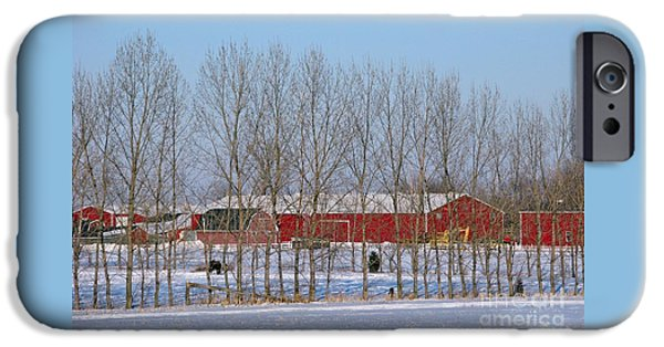 Shed iPhone Cases - Winter Tree Line iPhone Case by Ann Horn
